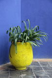 Plant pot royalty free stock photo