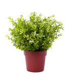 Plant pot Royalty Free Stock Photography
