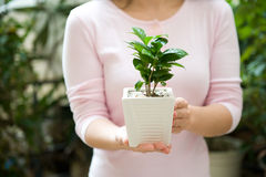 plant in pot Royalty Free Stock Image