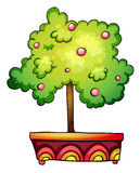 Plant in pot Stock Image