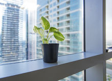 Plant pot. A small plant pot displayed in the window Royalty Free Stock Image
