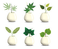 Plant in pot.  Stock Photography