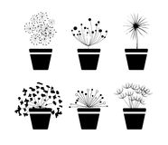 Plant in pot.  Stock Photo