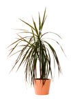 Plant in a pot Stock Image