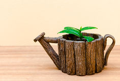 Plant in pot Stock Photo
