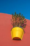 Plant in a pot Stock Photo