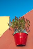 Plant in a pot Royalty Free Stock Photography