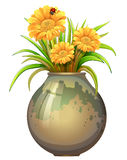A plant in a pot with blooming flowers Stock Photo