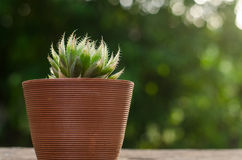 Plant pot with cactus with green background Stock Image