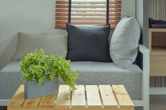 Plant pot on center wooden table and comfy seat Royalty Free Stock Image