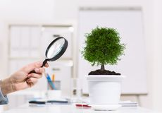 Plant in pot Royalty Free Stock Images