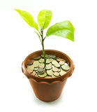 Plant in pot with coins , business concept Stock Photos
