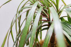 Plant in the pot. Cut botanic flower Stock Images