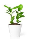Plant in pot Stock Photos