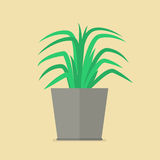 Plant in pot flat icon Royalty Free Stock Photos