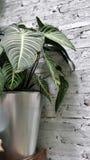 Plant pot on garden shelf Royalty Free Stock Image