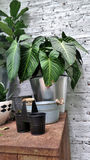 Plant pot on garden shelf Stock Photography