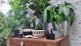 Plant pot on garden shelf Royalty Free Stock Photography