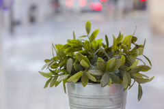 Plant pot. Green plant in a metal pot Stock Images