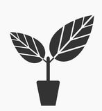 Plant in pot. Plant in the pot icon. Vector illustration Stock Photos