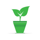 Plant in pot icon vector illustration Stock Photography