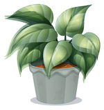 A plant in a pot Royalty Free Stock Images