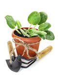 Plant in pot with implement Royalty Free Stock Photo
