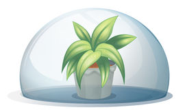A plant in a pot inside a transparent arc Royalty Free Stock Photo