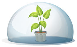 A plant in a pot inside a transparent dome Stock Image
