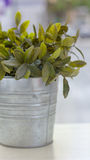 Plant pot. Metal pot with decorative plant Royalty Free Stock Photography