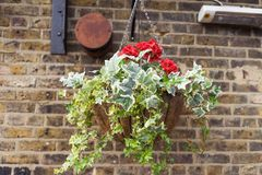 Plant in a pot near a brick wall in London. England Royalty Free Stock Photos