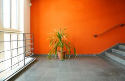 Plant in pot on a orange wall Stock Photo
