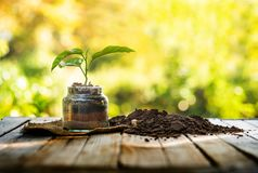Plant in pot with organic soil over nature background and sunlig royalty free stock image