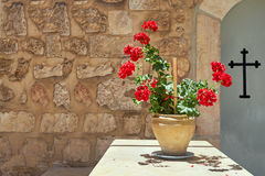 Plant in a pot with red flowers background cross Stock Photo