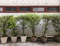 Plant pot row in front of the old office building wall. Plant pot row in front of the old office building wall which closed the window Royalty Free Stock Photography