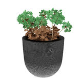 Plant in the pot Royalty Free Stock Photography