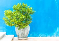 Plant pot on stair. With blue wall Royalty Free Stock Photography