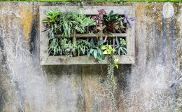 Plant pot to be invented on the wall is a stain. Plant pot to be invented on the cement wall is a stain Stock Images
