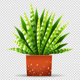 Plant in pot on transparent background. Illustration Royalty Free Stock Images