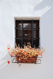 Plant Pot in Trullo Window Royalty Free Stock Photos