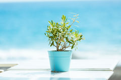 Plant in a pot on a turquoise sea Stock Image