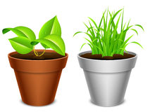 Plant in a pot. Royalty Free Stock Photos