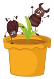 A plant in a pot with two smiling cockroaches Stock Photo