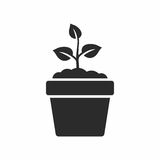 Plant in pot. Vector icon isolated on white background royalty free illustration