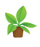 Plant in Pot. Vector illustration of potted plant in cartoon style Royalty Free Stock Photo