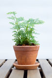 Plant in pot on wooden table Stock Images