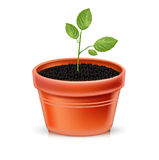 Plant pot and young plant  Stock Images