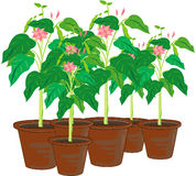 Plant pots royalty free illustration