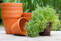 Free Plant Pots Royalty Free Stock Images - 32637549