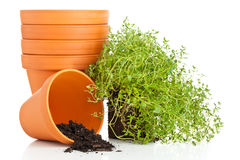 Free Plant Pots Royalty Free Stock Images - 32637629